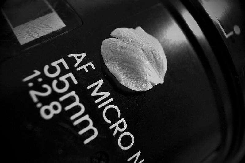 sakura petal