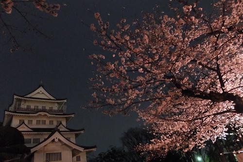 Sakura night viewing at Inohana
