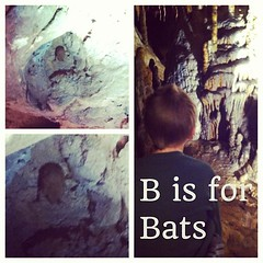 Bats ... at FL Caverns - we learned they are extremely helpful for the environment & for our health #homeschool #hswildlife