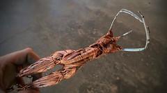 #progress #hips #legs #butt #booty #wire #sculpture #wiresculpture #wireweaving #wireweave #wirewrapping #wirewrap #metalart #art #artwork #elleraok #artist #copper #steel #commision #female #femaleform #beauty