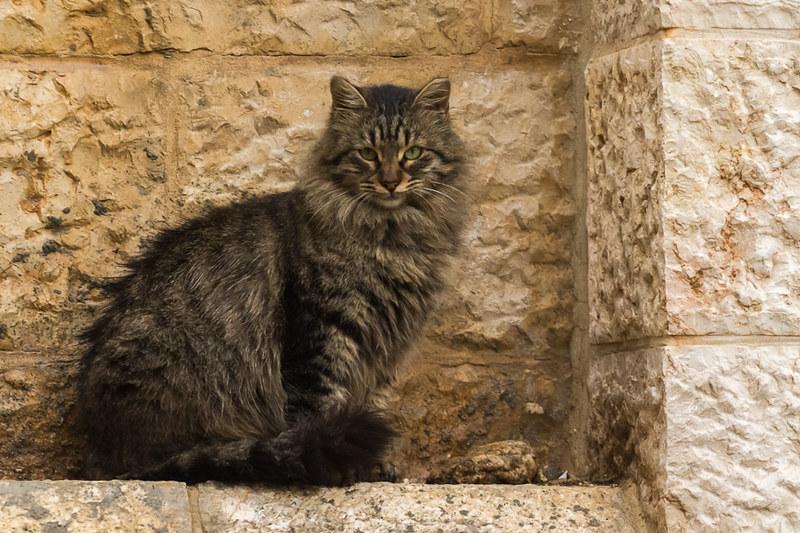 Israel-0412-2012-165400-2.jpg