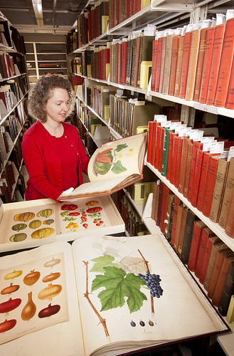 Special Collections librarian Sara B. Lee selects fruit and vegetable images from the Rare Book Collection at the USDA National Agricultural Library