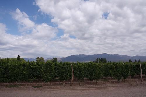 Vistalba Mendoza