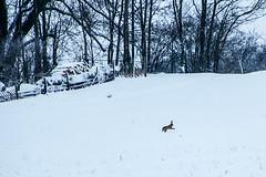 Lapin dans la neige
