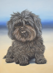 dog breed, animal, dog, schnoodle, tibetan terrier, mammal, havanese, lhasa apso, drawing, affenpinscher, terrier,