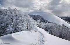 Monte Utero