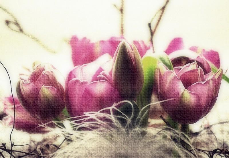 Just tulips