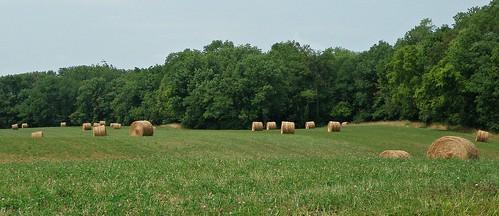 field farm farming roundbales