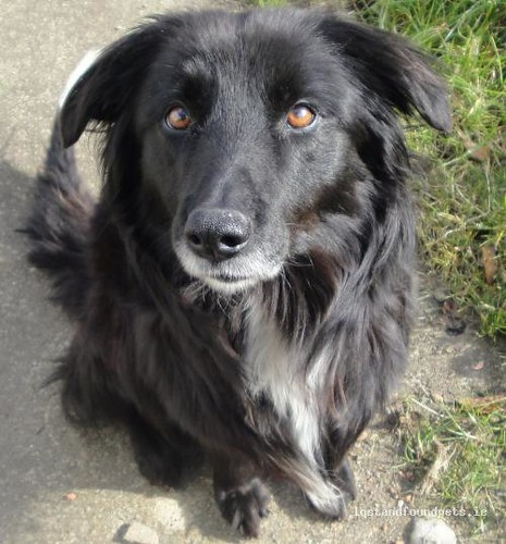 Sun, Mar 3rd, 2013 Found Female Dog - Carnew To Ferns Road, Carnew, Wicklow