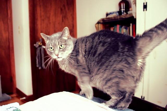 Floofy Cat