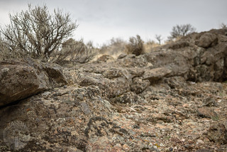 Moss and lichen: ancient battlelines