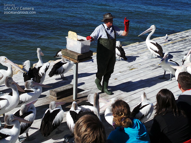 pelican feeding briefing