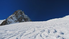 blue bird and great snow on the valle blanche