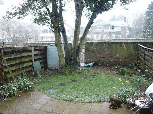 snowfront garden 23 March 2013