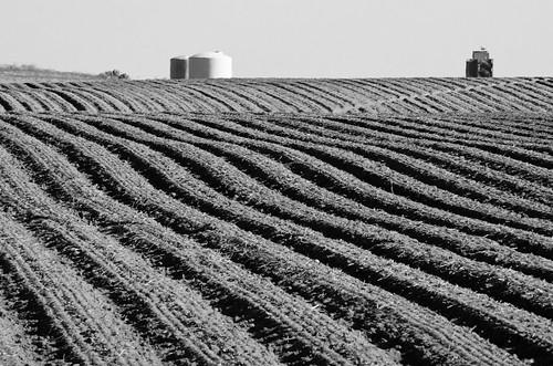 blackandwhite bw white black field landscape blackwhite washington nikon farm silo furrows