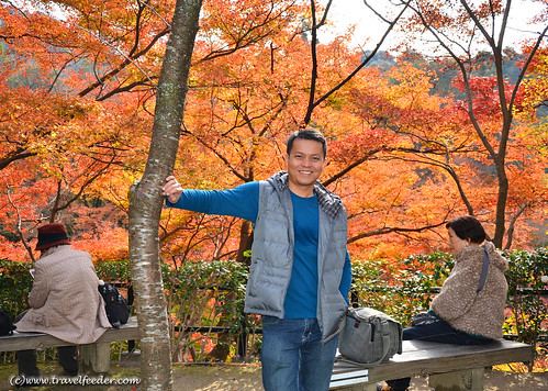Cecil in Kyoto during Autumn