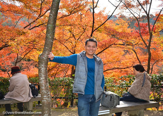 my photography blog - Cecil in Kyoto during Autumn