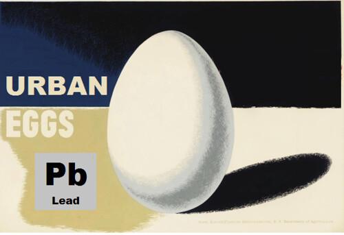 Urban Eggs