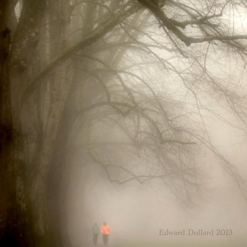 trees kilkenny ireland winter mist nature fog landscape hiver january atmosphere eire emeraldisle irlanda ierland leinster