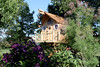 Tree house framed by Clematis and Tamerisk.