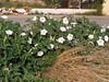 Kreta 2005-2 092