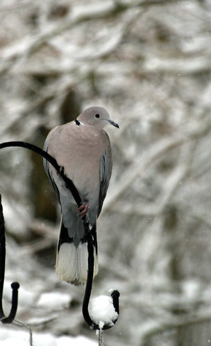 Stupid Doves