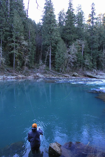 North umpqua river fishing and accommadation report the for Umpqua river fishing report