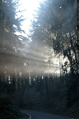 sunrays through the trees going up cornell street   …