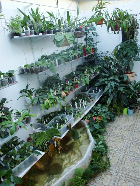 Dans mon Jardin d'Hiver 8429402239_e170cbbfec_z