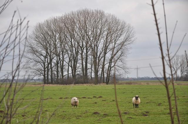 Where the sheep have no name