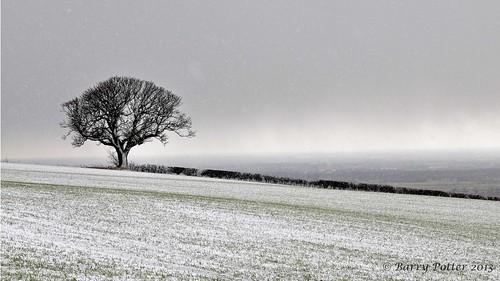 landscape nikon yorkshire eastyorkshire barrypotter valeofyork yabbadabbadoo eastridingofyorkshire yorkshirewolds nikond90 barrypotternet nikkor28mm300mm3556ed edenmedia barrypotteredenmedia