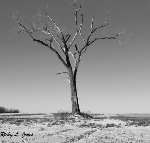 Lonely Tree by Ricky L. Jones Photography