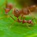 Formicidae - Photo (c) Rushen, algunos derechos reservados (CC BY-NC)