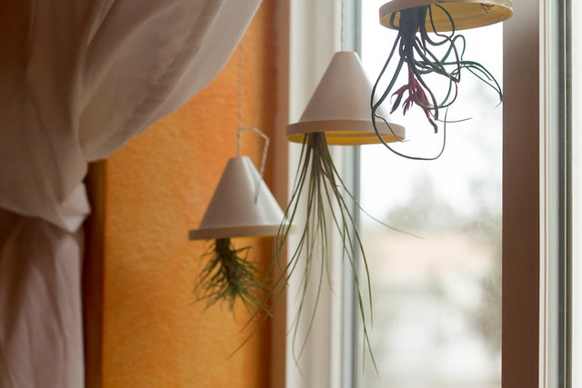 air plant planters1 (1 of 1)