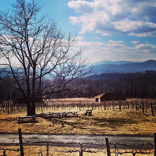 Lovely day at Fox Meadow #virginia #vineyard #mountains #winter