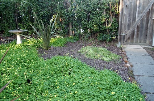 partially weeded yard