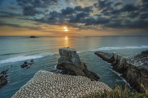 sunset sea newzealand seascape clouds island nikon rocks waves wideangle cliffs auckland northisland westcoast seabird gannet rockstack muriwai colourimage leefilters 1024mm d7000 lee06gndhard lee06gndsoft availableingettyimages