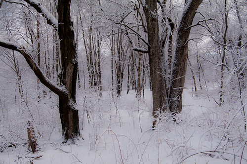 trees winter snow woods day newengland northreading ipswichriverpark