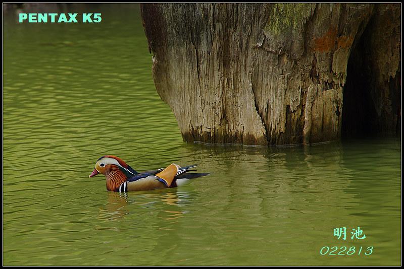 肉腳拍攝之明池美景