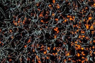 Jason Pollock