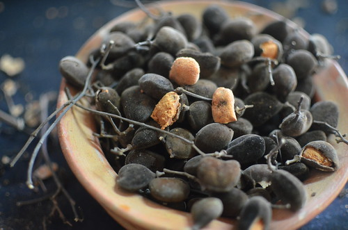 10 Diseases You Never Knew African Velvet Tamarind Could Treat