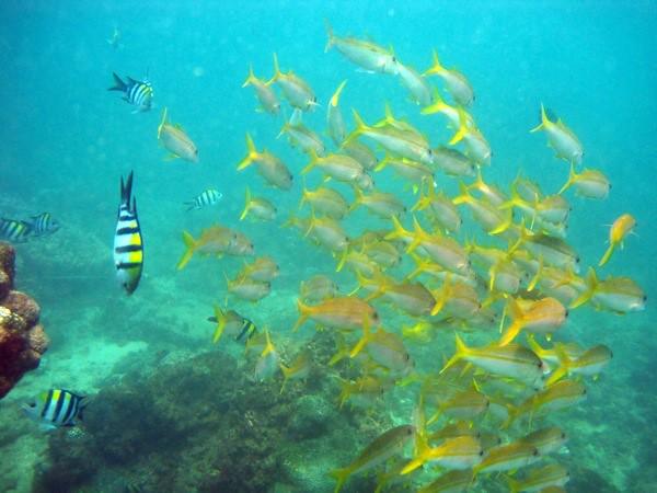 Diving at Bali - rebeccasaw-018