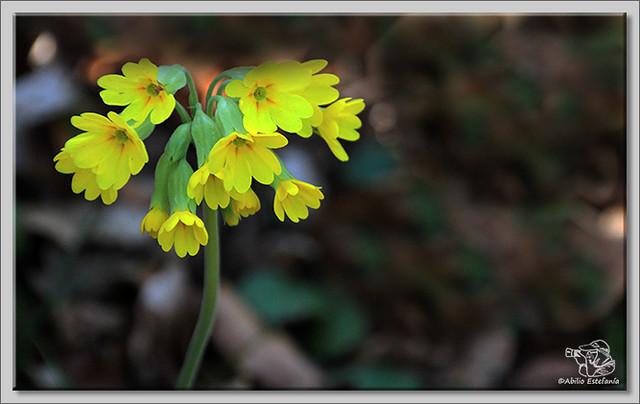 5 Flores