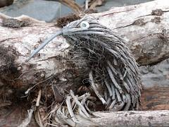 nest(0.0), root(0.0), branch(0.0), winter(0.0), sculpture(0.0), bird nest(0.0), driftwood(1.0), wood(1.0), tree(1.0), plant(1.0), trunk(1.0), wildlife(1.0),