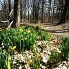 Spring is right around the corner!  Few spots of green along the trails today.  Flowers almost ready to pop open.