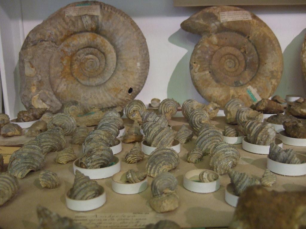 Inferior Oolite (Sedgwick Museum)