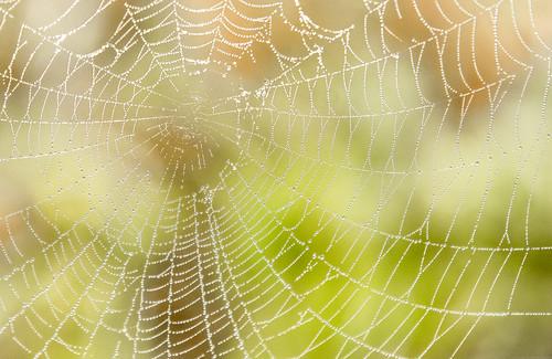 [フリー画像素材] バックグラウンド, クモの巣・糸, 雫・水滴 ID:201303260400