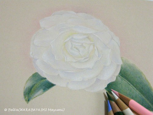 2013_03_19_camellia_03_s by blue_belta