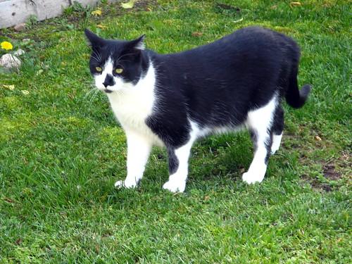 Charlie Cat 2 1:2 yrs. 03