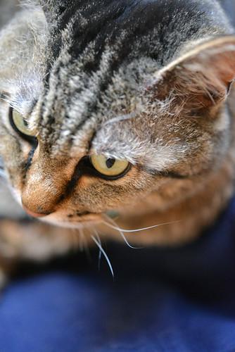 """cat """"TAMAGO"""""""
